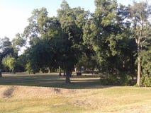 Όμορφα δέντρα στο πάρκο πόλεων της Βουδαπέστης στοκ φωτογραφία