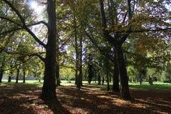 όμορφα δέντρα φθινοπώρου Στοκ Φωτογραφία