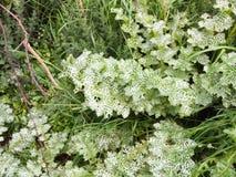 Όμορφα διαφοροποιημένα πράσινα και άσπρα φύλλα φυτών στο πάτωμα Στοκ Εικόνα