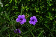 Όμορφα δονούμενα ζωηρόχρωμα λουλούδια στην άνοιξη Στοκ Εικόνα
