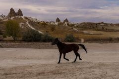 Όμορφα ελεύθερα τρεξίματα αλόγων μεταξύ των γλυπτών πετρών στοκ φωτογραφίες