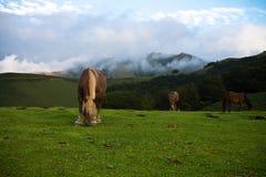 Όμορφα ελεύθερα άλογα pottok που στα βουνά irati, βασκική χώρα, Γαλλία Στοκ φωτογραφία με δικαίωμα ελεύθερης χρήσης