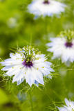 Όμορφα ζωηρόχρωμα άγρια λουλούδια που αυξάνονται στο λιβάδι στην ηλιόλουστη θερινή ημέρα Στοκ φωτογραφίες με δικαίωμα ελεύθερης χρήσης