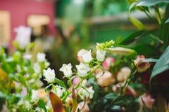 Όμορφα ζωηρόχρωμα λουλούδια στο ανθοπωλείο Στοκ Φωτογραφία