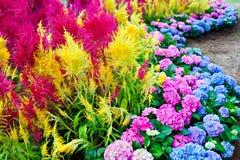 όμορφα ζωηρόχρωμα λουλούδια Στοκ Φωτογραφία