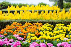 όμορφα ζωηρόχρωμα λουλούδια Στοκ Εικόνα