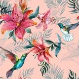 Όμορφα ζωηρόχρωμα πετώντας κολίβρια και κόκκινα λουλούδια στο ρόδινο υπόβαθρο Εξωτικό τροπικό άνευ ραφής σχέδιο Ζωγραφική Watecol διανυσματική απεικόνιση