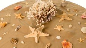Όμορφα θαλασσινά κοχύλια στην άμμο, λευκό, περιστροφή απόθεμα βίντεο