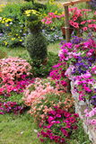 Όμορφα θερινά λουλούδια στοκ φωτογραφίες