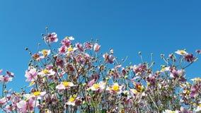 Όμορφα θερινά λουλούδια με το μπλε ουρανό Στοκ εικόνα με δικαίωμα ελεύθερης χρήσης