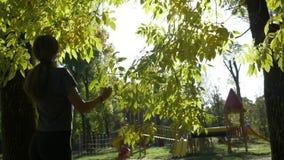 Όμορφα θηλυκά πρότυπα φύλλα δέντρων θαυμασμού ικανότητας και απόλαυση του ηλιόλουστου φωτεινού φωτός φθινοπώρου στο πάρκο σε σε α απόθεμα βίντεο