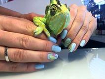 όμορφα θηλυκά χέρια με ένα μπλε μανικιούρ και ένα μοντέρνο σχέδιο στοκ εικόνα