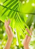 Όμορφα θηλυκά χέρια στην πράσινη ανασκόπηση Στοκ φωτογραφία με δικαίωμα ελεύθερης χρήσης