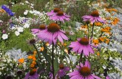 Όμορφα διακοσμητικά λουλούδια στο floral υπόβαθρο θαμπάδων Στοκ Εικόνες
