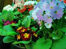 Όμορφα διαφορετικά λουλούδια Στοκ Φωτογραφίες