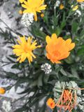 Όμορφα κίτρινα λουλούδια    με το μαύρο υπόβαθρο στοκ εικόνες με δικαίωμα ελεύθερης χρήσης