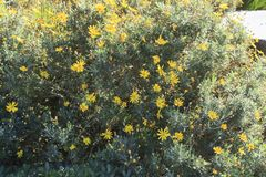 Όμορφα κίτρινα λουλούδια σε μια ηλιόλουστη ημέρα Στοκ φωτογραφίες με δικαίωμα ελεύθερης χρήσης