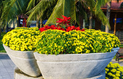 Όμορφα κίτρινα λουλούδια σε ένα κρεβάτι λουλουδιών Στοκ Εικόνες