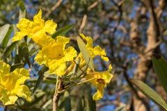 Όμορφα κίτρινα λουλούδια στο πάρκο Στοκ φωτογραφία με δικαίωμα ελεύθερης χρήσης