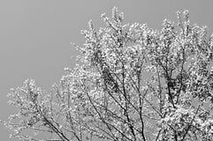 Όμορφα κίτρινα φύλλα με το μπλε ουρανό Στοκ φωτογραφίες με δικαίωμα ελεύθερης χρήσης