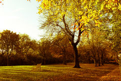 Όμορφα και φωτεινά φθινοπωρινά δέντρα στο σκωτσέζικο πάρκο με το φως του ήλιου απογεύματος Στοκ φωτογραφίες με δικαίωμα ελεύθερης χρήσης