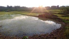 Όμορφα καλλιεργήσιμο έδαφος και δέντρα και ουρανός στοκ εικόνα με δικαίωμα ελεύθερης χρήσης