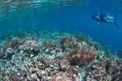 Όμορφα κοραλλιογενής ύφαλος και Snorkeler σε Raja Ampat στοκ εικόνα με δικαίωμα ελεύθερης χρήσης