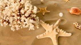 Όμορφα κοχύλια και κοράλλι στην άμμο ενάντια, περιστροφή, κινηματογράφηση σε πρώτο πλάνο φιλμ μικρού μήκους