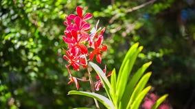 Όμορφα κόκκινα λουλούδια που ταλαντεύονται στο αεράκι Έννοια θερινών διακοπών απόθεμα βίντεο