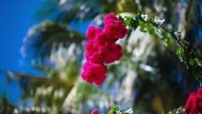 Όμορφα κόκκινα λουλούδια που ταλαντεύονται στο αεράκι Μπλε ουρανός και φοίνικες στο υπόβαθρο Έννοια θερινών διακοπών φιλμ μικρού μήκους