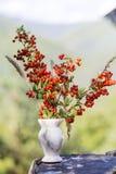 Όμορφα κόκκινα λουλούδια φθινοπώρου στο μικρό βάζο Στοκ εικόνα με δικαίωμα ελεύθερης χρήσης