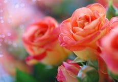 Όμορφα κόκκινα τριαντάφυλλα στο αφηρημένο υπόβαθρο στοκ εικόνες