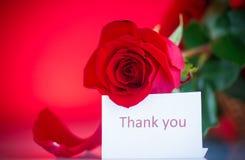 όμορφα κόκκινα τριαντάφυλ&la Στοκ φωτογραφία με δικαίωμα ελεύθερης χρήσης