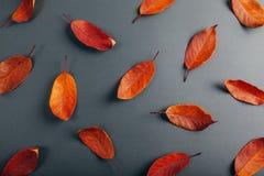 Όμορφα κόκκινα φύλλα σε γκρίζο χαρτί αφηρημένη ανασκόπηση φθινοπώρου Στοκ Εικόνες