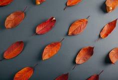 Όμορφα κόκκινα φύλλα σε γκρίζο χαρτί αφηρημένη ανασκόπηση φθινοπώρου Στοκ φωτογραφίες με δικαίωμα ελεύθερης χρήσης