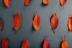 Όμορφα κόκκινα φύλλα σε γκρίζο χαρτί αφηρημένη ανασκόπηση φθινοπώρου Στοκ εικόνα με δικαίωμα ελεύθερης χρήσης