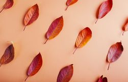 Όμορφα κόκκινα φύλλα σε καφετί χαρτί αφηρημένη ανασκόπηση φθινοπώρου Στοκ Εικόνα