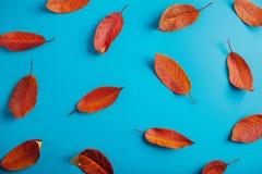 Όμορφα κόκκινα φύλλα σε μπλε χαρτί αφηρημένη ανασκόπηση φθινοπώρου Στοκ Φωτογραφίες
