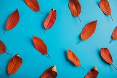 Όμορφα κόκκινα φύλλα σε μπλε χαρτί αφηρημένη ανασκόπηση φθινοπώρου Στοκ Εικόνα