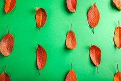 Όμορφα κόκκινα φύλλα στην Πράσινη Βίβλο αφηρημένη ανασκόπηση φθινοπώρου Στοκ Φωτογραφία