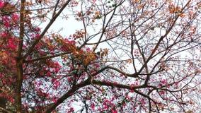 Όμορφα λουλούδια άνοιξη στη φύση Στοκ φωτογραφία με δικαίωμα ελεύθερης χρήσης
