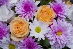 Όμορφα λουλούδια άνοιξη του πορφυρού χρώματος Στοκ Εικόνες