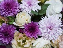 Όμορφα λουλούδια άνοιξη του πορφυρού χρώματος Στοκ εικόνα με δικαίωμα ελεύθερης χρήσης