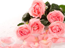 όμορφα λουλούδια ανθο&delta Στοκ Εικόνα
