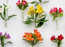 όμορφα λουλούδια διακοσμήσεων Στοκ Εικόνα