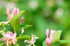 όμορφα λουλούδια θάμνων στοκ εικόνες