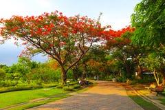 Όμορφα λουλούδια και δάσος δέντρων που εξωραΐζεται στο δημόσιο κήπο το καλοκαίρι στοκ φωτογραφίες