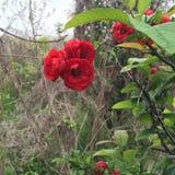 Όμορφα λουλούδια και φυσικές εγκαταστάσεις Floral υπόβαθρο λουλουδιών Garden Διανυσματική απεικόνιση