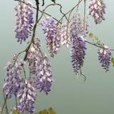 Όμορφα λουλούδια και φυσικές εγκαταστάσεις Floral υπόβαθρο λουλουδιών Garden Απεικόνιση αποθεμάτων