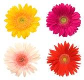 όμορφα λουλούδια μαργα&rh στοκ εικόνα